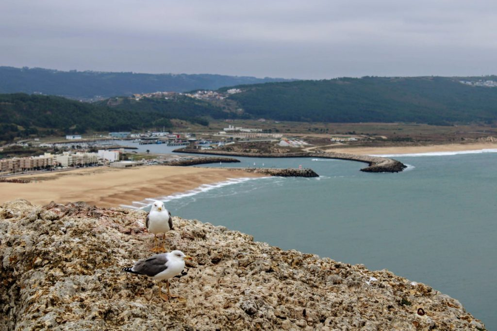 cosa vedere a Nazaré: spiaggia con gabbiani