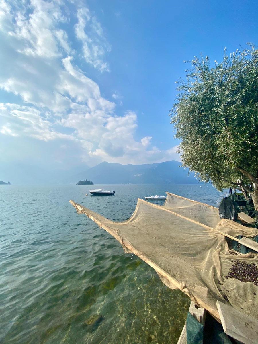 camping vela raccolte delle olive