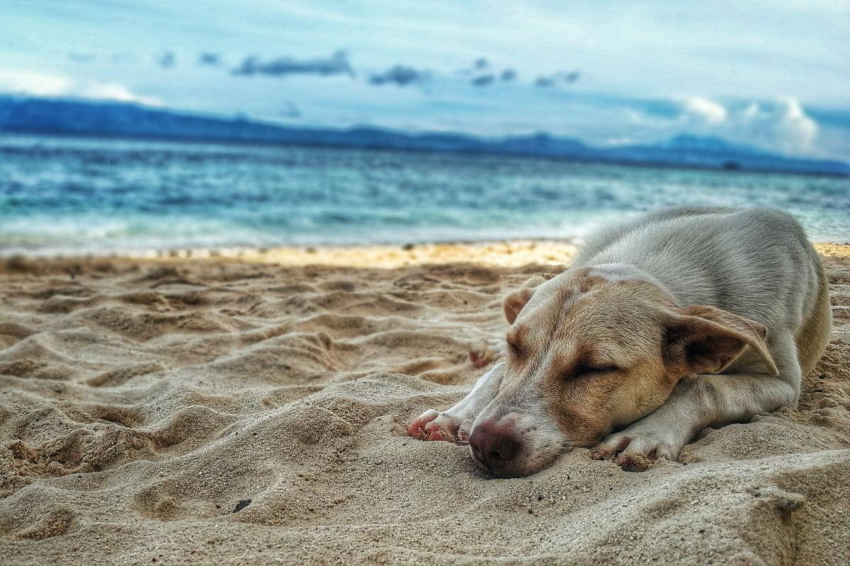 Cane in spiaggia sdraiato nella sabbia