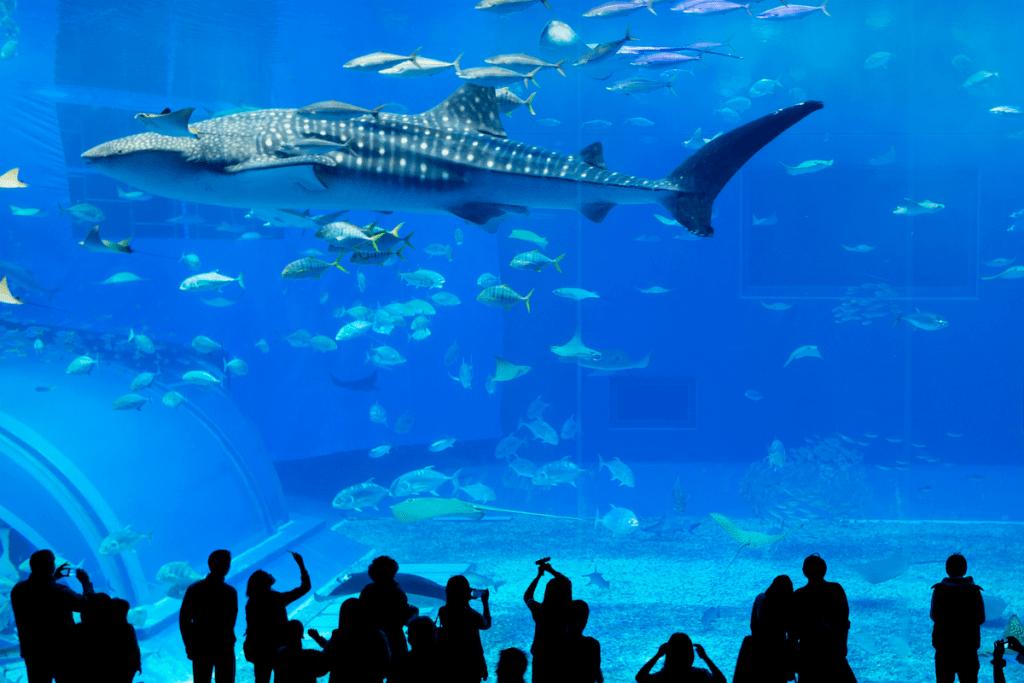 Oceanario di Lisbona Parco delle Nazioni
