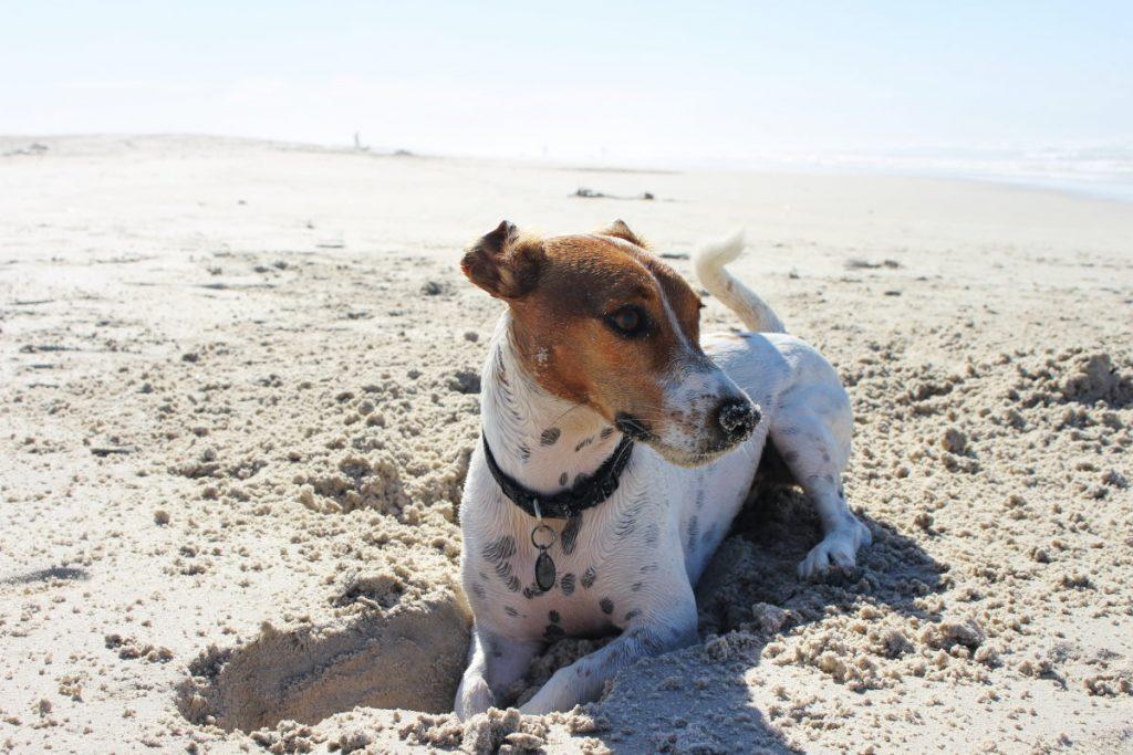 spiagge pet-friendly