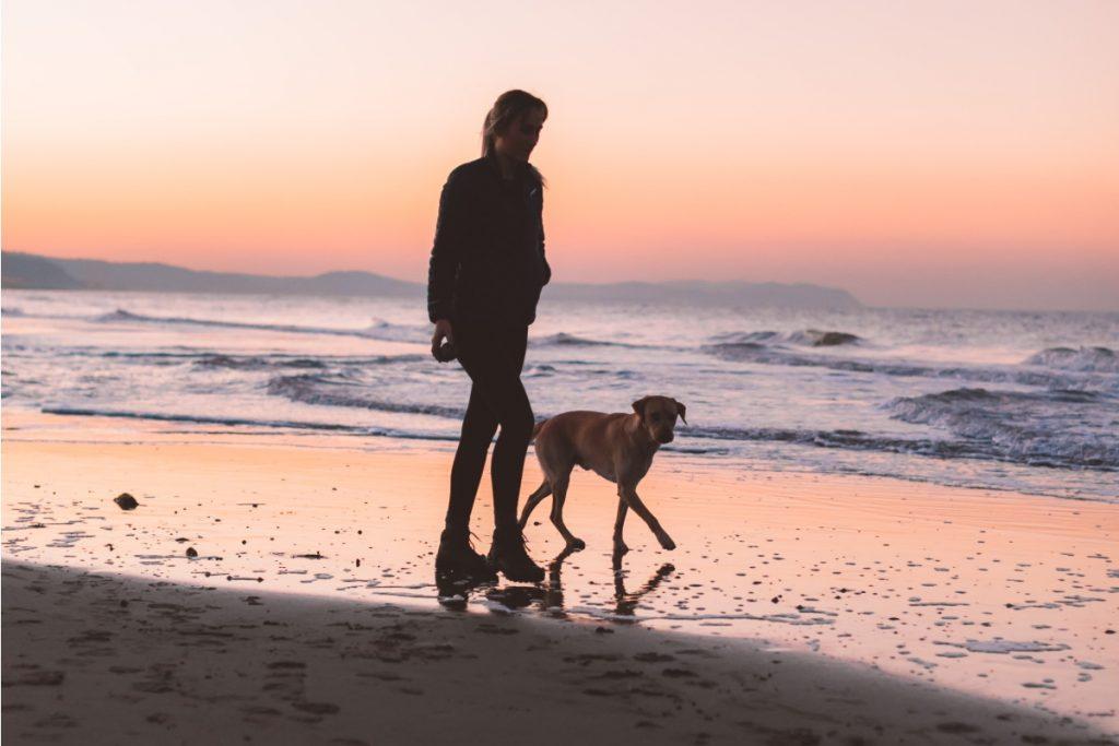 in vacanze con il cane