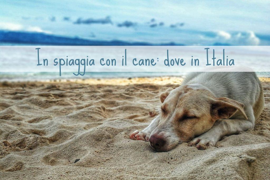 In spiaggia con il cane: le regioni più dog friendly in Italia